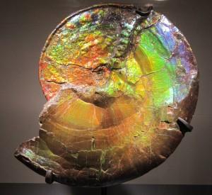 Ammonite [classed as a gem], NHM
