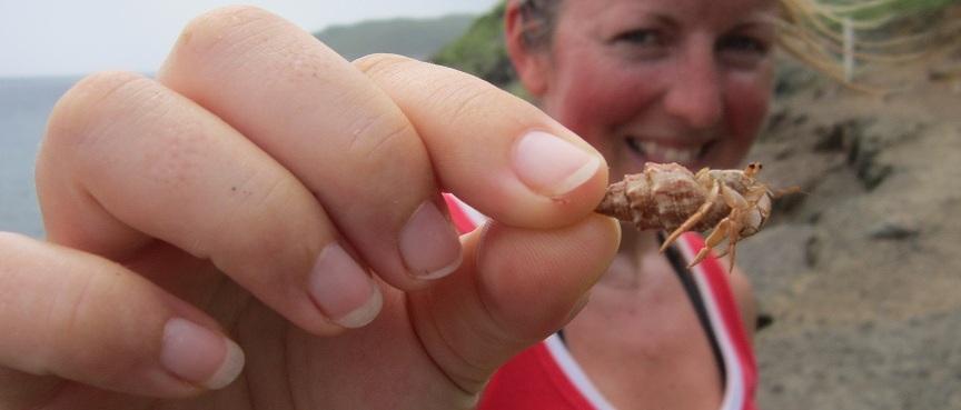Teeny Weeny Hermit Crab